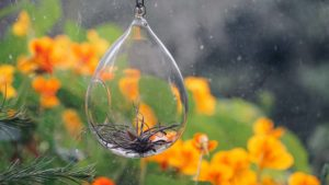 What Is an Air Plant? The Lazy Gardener's Favorite Foliage