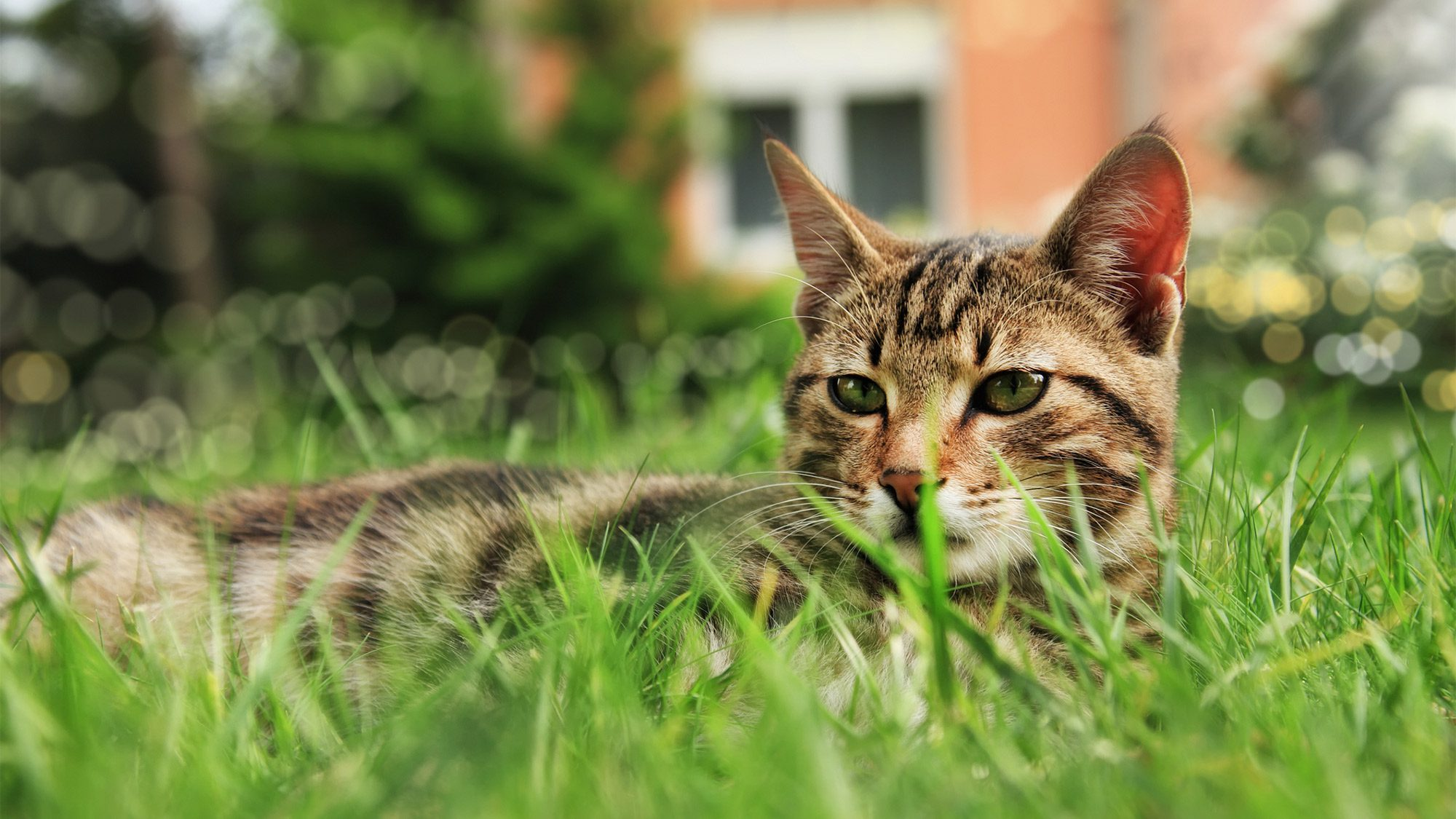 How to Keep Cats Out of Your Yard, Sandbox, and Other ...