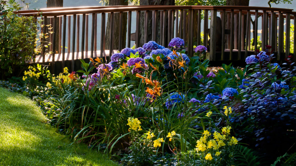 These Shade Loving Plants Will Flourish Without Tons Of Sun Realtor Com