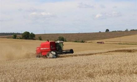 Setor estima que safra de trigo terá produção de 2.060.114 de toneladas