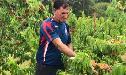 Pêssego tem aumento de produção na próxima safra