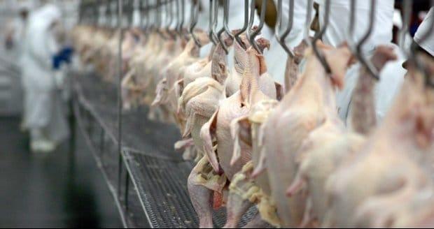 Novas habilitações para o México tendem aumentar exportações de frango em 2019