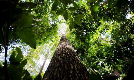 Valor da produção florestal no Brasil atinge R$ 20,6 bilhões