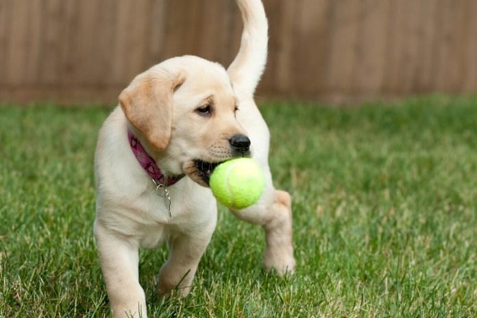 RDJ Law Pets