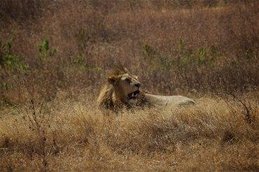 Safari 23