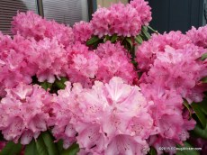 Port Angeles Flowers