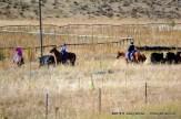 Modern Cowboys & Cowgirls