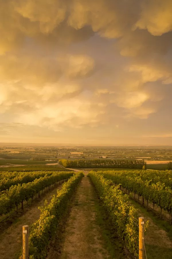 Sunset at Seven Hills Vineyard, Walla Walla, Washington | Les Régions du Vin : État de Washington