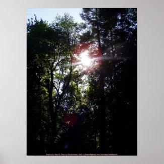 Evening Sun Rays #1