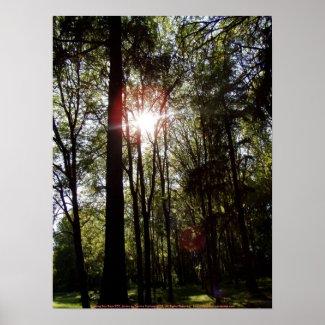 Evening Sun Rays #50