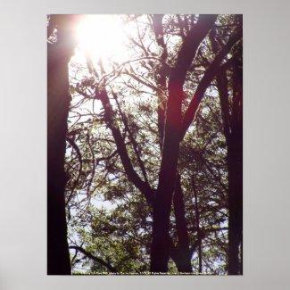 Evening Sun Rays #49