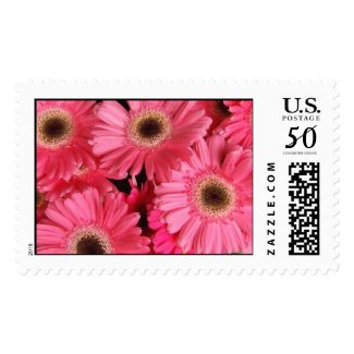 Pink Delight postage