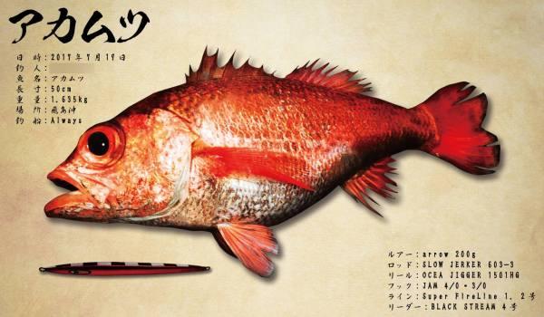 アカムツ魚拓