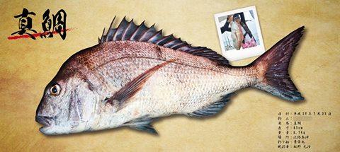 真鯛-デジタル魚拓