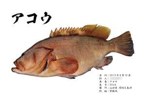 カラー魚拓