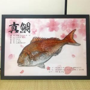 真鯛魚拓-額縁
