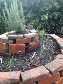 Garden Grown Garlic!