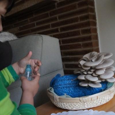 DIY oyster mushroom kit