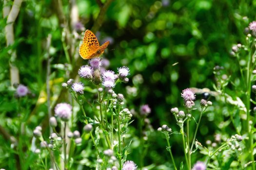 Image of a butterfly on a wildflower