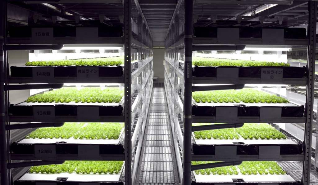 The future of farming: Japan goes vertical and moves indoors
