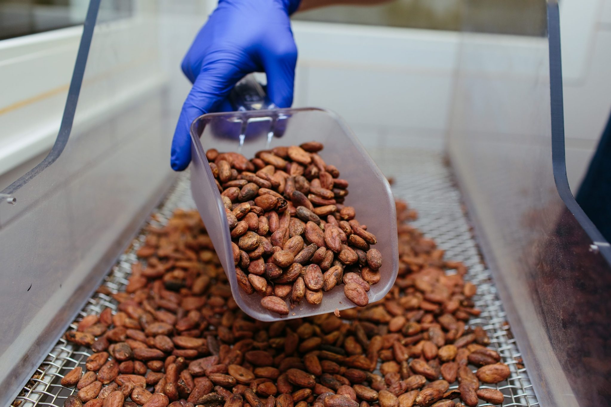 Brown coffee beans in white plastic container