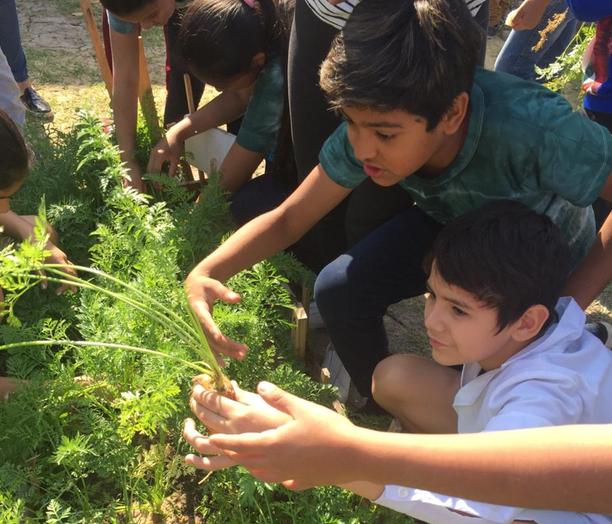 Día Mundial de la Alimentación: 'Comunidades Sabias en la producción de alimentos y el uso de antibióticos'
