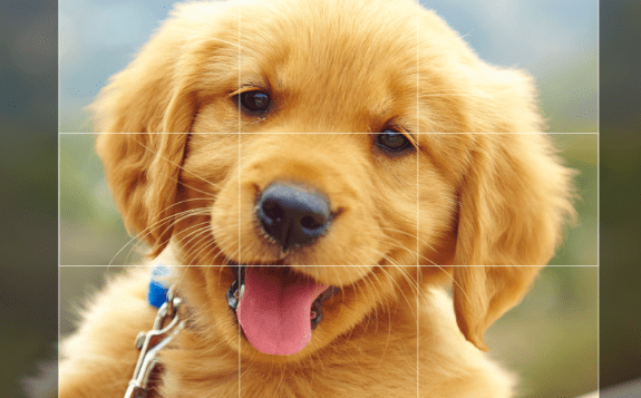 Easy React Image Crop Component-min