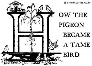 How the Pigeon Became a Tame Bird