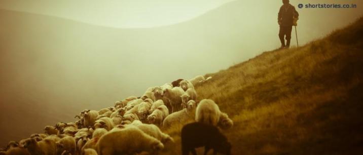 shepherd-sheeps