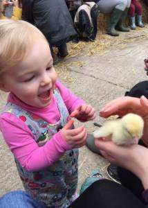 meeting-duck-ducks-smithills-farm-readaraptor-hatchling