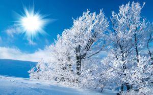 fonds-ecran-foret-hiver-4