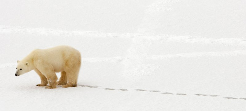 Polar bear. (photo: Paul J. Richards/AFP/Getty Images)