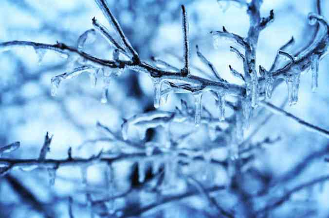 Close-up of ice-coated branches.