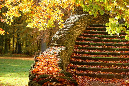 Autumn leaves collecting on stone steps.
