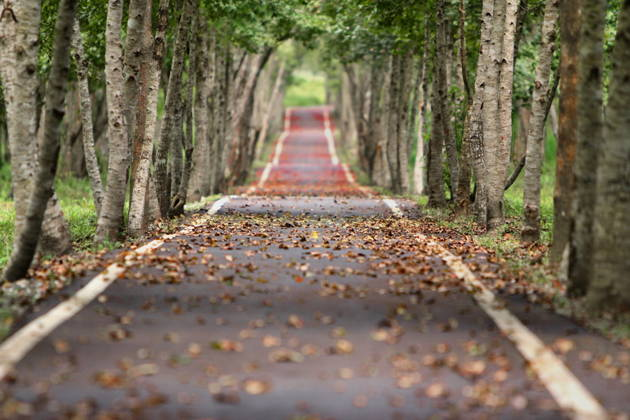 This woodland road through a narrow lane of trees with falling leaves beckons travellers the way plots induce readers to keep reading. They ask questions and read on for the answers.