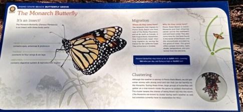 Monarch Butterfly Grove