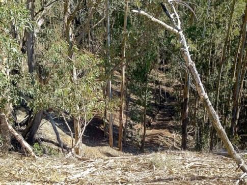 Stenner Creek Trail