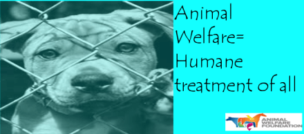 Thumbnail for PSA-Animal Welfare
