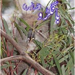 Bangroo Urdu Novel Complete By MA Rahat Pdf