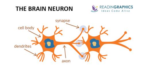 The Brain that Changes Itself summary - the human brain neuron