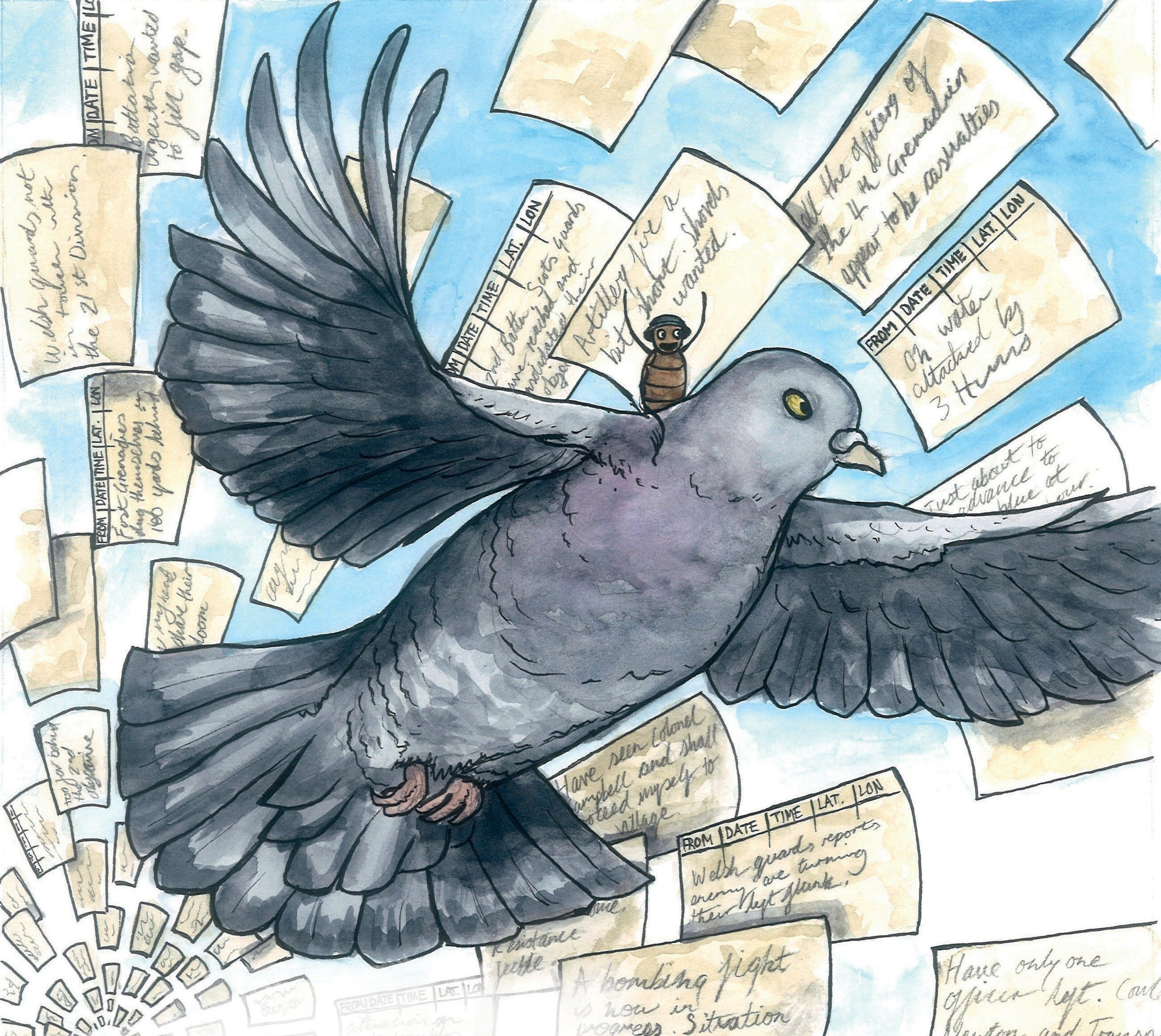 Behind the books – carrier-pigeons