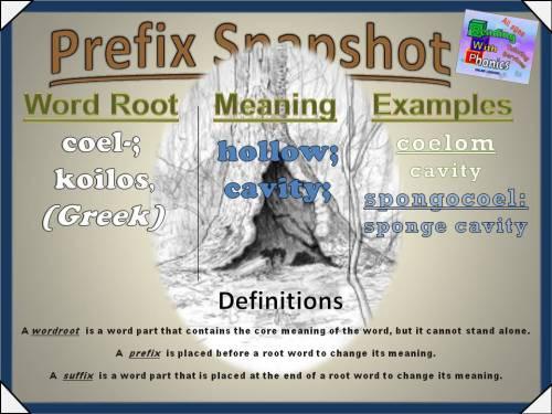 coel- Prefix Snapshot