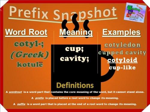 cotyl- prefix snapshot