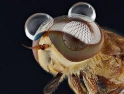 Фотограф Yudy Sauw и его захватывающие портреты насекомых в Тангеранге, Индонезия.