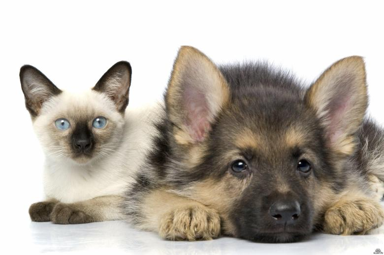 cats-and-dogs-01