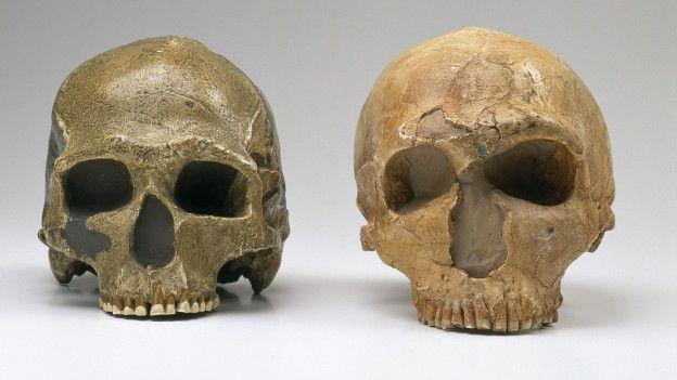 150916113808_neanderthal_big_eyes_2_624x351_naturalhistorymuseumalamystockphoto_nocredit