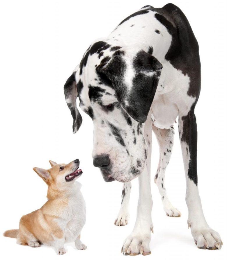 big dob-little dog 2newlsetter