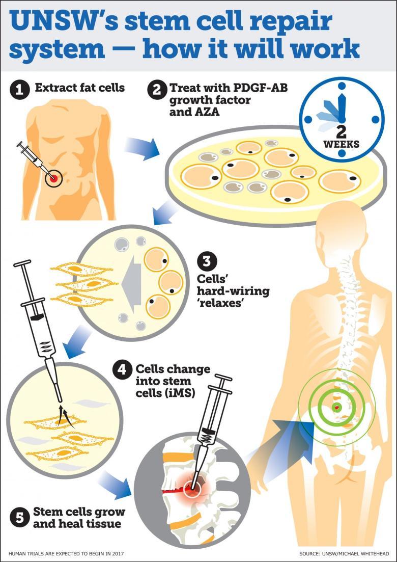 cell-repair
