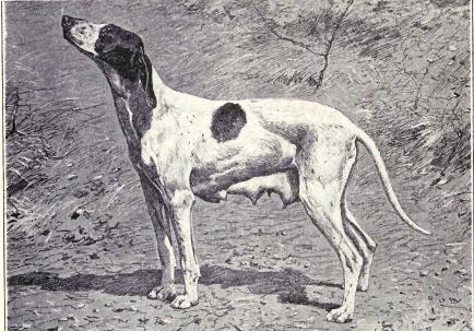 extinct-breed-dogs-02