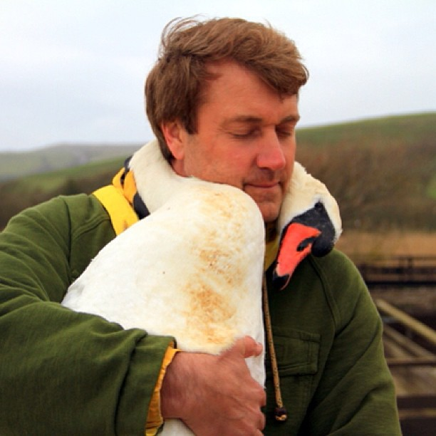 swan-hugs-01